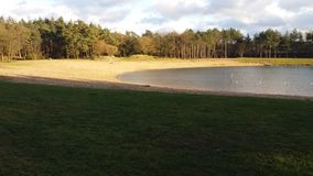 A lake in the forest by Nunspeet Royalty Free Stock Photography
