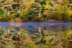 Lake and forest reflection Royalty Free Stock Image