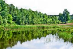 Lake with forest reflection Royalty Free Stock Photo