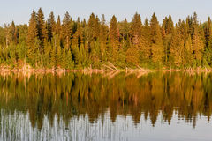 Lake forest reflection summer Royalty Free Stock Photography