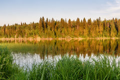 Lake forest reflection summer Stock Images