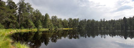 Lake in forest with reflection of trees and sky Royalty Free Stock Images