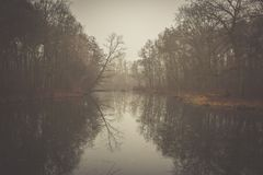 Lake and forest. A ride in a foggy forest Royalty Free Stock Photos