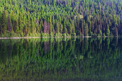 Lake in the forest Stock Photography
