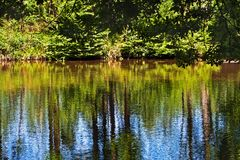 Lake. In a forest with shimmering water Royalty Free Stock Image