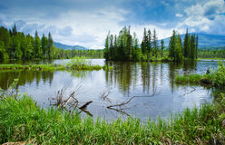 Lake in the forest Royalty Free Stock Photo