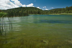 Lake and forest. This is a silver lake new mexico view Royalty Free Stock Image