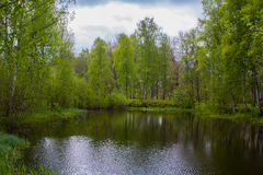 Lake in the forest Stock Image