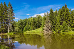 Lake in forest Royalty Free Stock Image