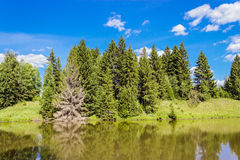 Lake in forest Stock Photos