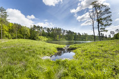The lake in the forest in South Poland Stock Image