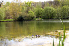 Lake in the Forest at spring Stock Photos