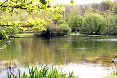 Lake in the Forest at spring Royalty Free Stock Photo