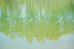 Lake in the forest. In summer royalty free stock photography
