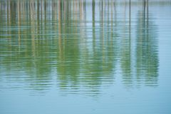 Lake in the forest. In summer royalty free stock photos