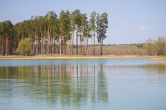 Lake in the forest. In summer royalty free stock image