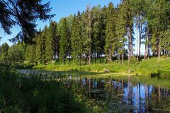 Lake in the forest in summer royalty free stock photos