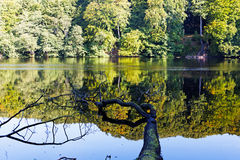 The lake in a forest in sunshine Stock Photography
