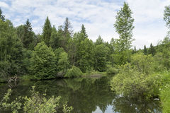 Lake forest. Thicket on the shore of lake forest Stock Photography