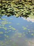 Lake in forest with water surface covered by plants Stock Image