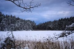A lake in a forest during winter in Scandinavia Royalty Free Stock Image