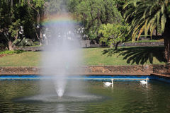The lake and fountain, rainbow and white swans Royalty Free Stock Images