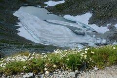 Blooming daisies and frozen mountain lake, High Tatras. The lake Frozen royalty free stock photo
