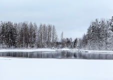 Lake and frozen trees at winter Royalty Free Stock Photos