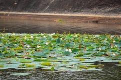 Lake full of lotus flower, Srí Lanka Royalty Free Stock Photos