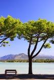 Lake Garda. Idyllic bench under pine trees on the shores of Lake Garda in Peschiera, Italy Royalty Free Stock Images