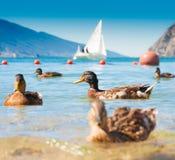 Lake Garda Arkivbild