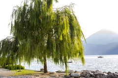 Lake Garda Royaltyfri Foto
