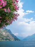 Lake Garda with the flowers of a Nerium oleander tree in the foreground. Lake Garda and part of Limone sul Garda with the flowers of a Nerium oleander tree in Stock Images