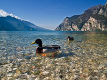 Lake Garda with a touch of ora Stock Image