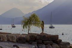 Lake Garda. Willow on the shores of Lake Garda royalty free stock photography