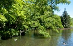 Lake in the garden Stock Image