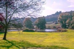 Lake in a garden Stock Image