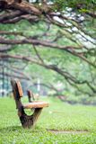 Lake garden at taiping malaysia. Wooden chair at lake garden at taiping malaysia Stock Image