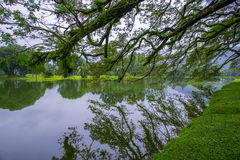 Lake Garden, Taiping. Took this photo during travelling trip to Taiping, Perak,Malaysia Stock Image