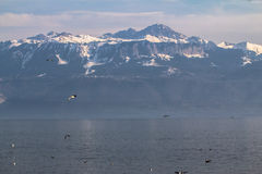 Lake Geneva in the background of the Alps Royalty Free Stock Photos