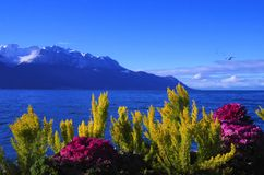 Lake Geneva. Beautiful landscape over the Lake Geneva in Montreux in Switzerland Royalty Free Stock Image