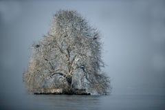 Lake Geneva, frost covered tree Stock Photos