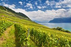 Lake Geneva med vingårdar royaltyfria bilder