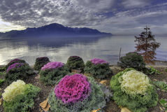 Lake Geneva, Montreaux, Switzerland Stock Image