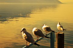 Lake Geneva, Switzerland and birds at sunset stock image
