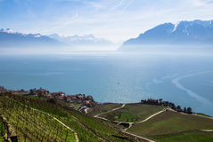 Lake Geneva. Vineyards of the Lavaux region over lake Leman (lake of Geneva Stock Image