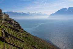 Lake Geneva. Vineyards of the Lavaux region over lake Leman (lake of Geneva Royalty Free Stock Photography