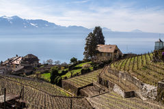 Lake Geneva. Vineyards of the Lavaux region over lake Leman (lake of Geneva Stock Images