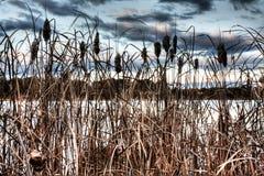 Lake Ginninderra Stock Photography