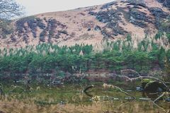 Green Trees and Water Reflections royalty free stock photos